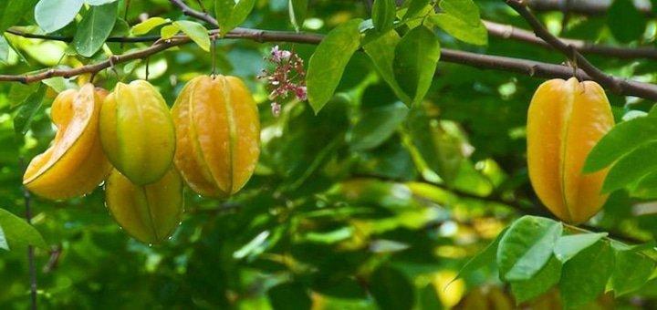 Экскурсия «Тропический рай» с посещением банановой фермы от туристической компании «Світ без меж»