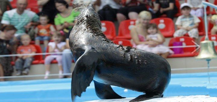Билеты на посещение дневного шоу «Весна с дельфинами» в дельфинарии «Немо». Количество ограничено!