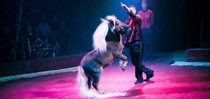 2 билета по цене одного на грандиозное шоу «ПОЕХАЛИ!» c 17.08 до 20.08 в цирке «Олимп»
