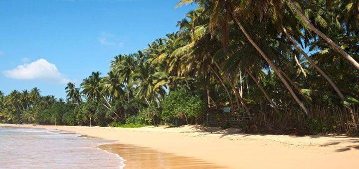 Скидка 50$ на все туры на Шри-Ланку от компании «LiveLoveTravel»