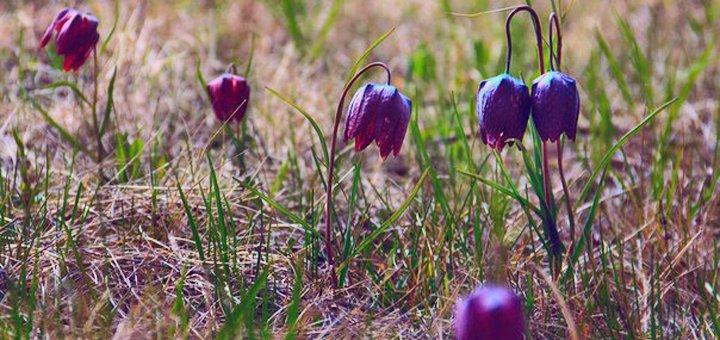 Экскурсионный тур «Львов и долина диких тюльпанов» с проживанием и экскурсиями от «Tour U»