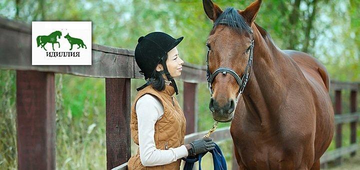 Часовая или двухчасовая прогулка на лошадях, либо абонемент на месяц или 2 месяца занятий по обучению верховой езде!