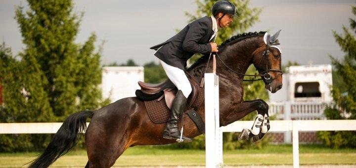 До 3 профессиональных занятий по обучению конному спорту в клубе «IloveMyHorse»